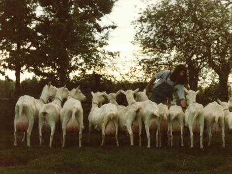 Er waren eens veertien witte geiten