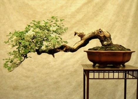 Een haiku is een geschreven bonsai