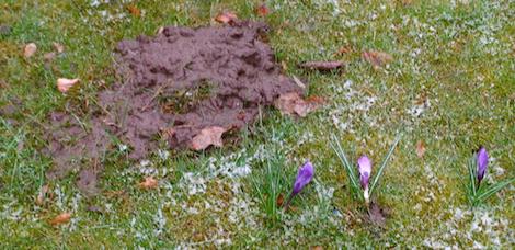 Het voorjaar duwt