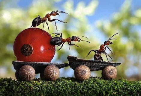 Mieren op pad