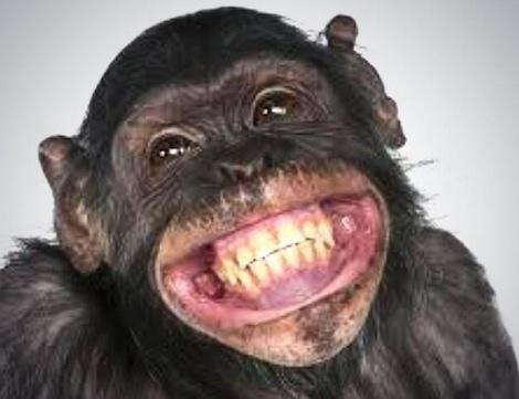 De aap lacht zijn tanden bloot