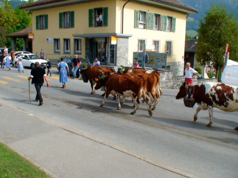 La descente des vaches in Etivaz (Zwitserland)