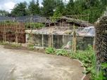 29 mei - ondergroei aanplantingen voor de leibomen