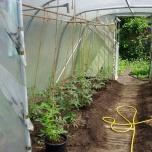 29 mei - de tomaten zijn in de was