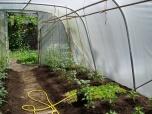 29 mei - komkommer, tomaten en paprika's