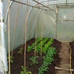 4 mei - de voorjaarsgroenten wijken voor de tomaten