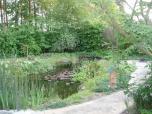 4 mei - nog één waterlelie rest er in de vijver