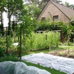 29 mei - het wortelbed met vliesdoek beschut tegen de wortelvlieg