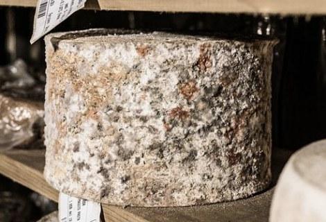 Met melk, zout en stremsel maakt men kaas