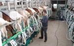 Koen, de geitenboer