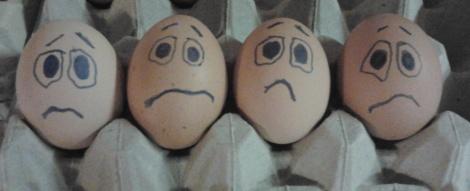 Wie zit er met een ei?